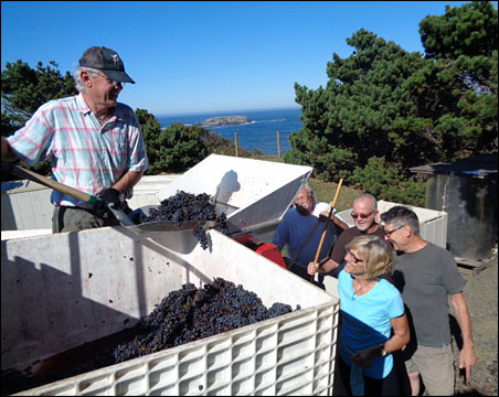 loading grapes into the de-stemmer